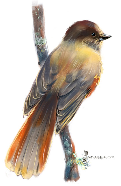 Siberian jay a bird painting by Artmagenta