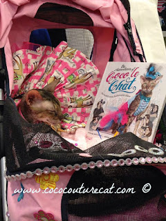 Coco, the Couture Cat is the star of the book, Coco le Chat!