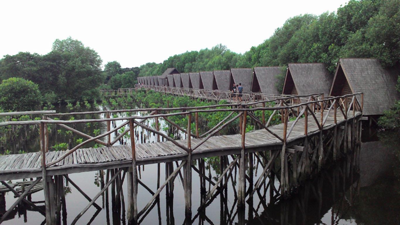 wisata hutan mangrove pik ini memiliki lahan seluas 99 82 hektar dengan vegetasi utamanya adalah pohon mangrove atau biasa dikenal hutan bakau