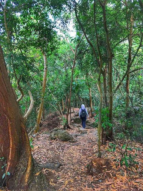 Cendawan pokok dan daun musim luruh menghias idea-idea – lebih banyak alam semula jadi