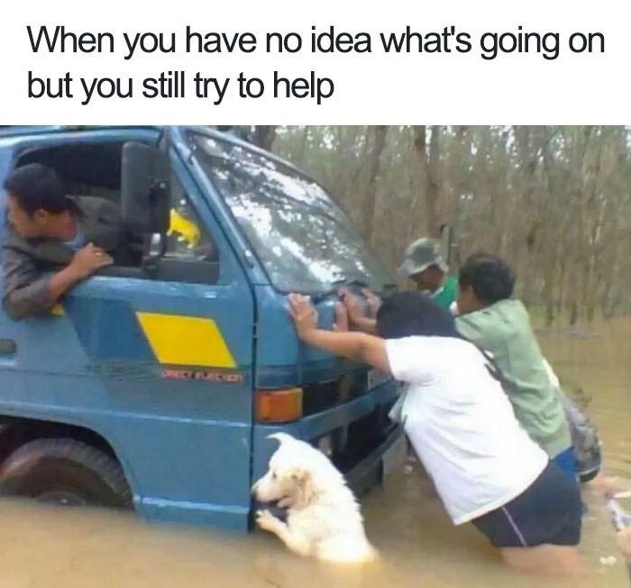 40 Funny Dog Memes Photos That Make Your Day (Animal Memes)