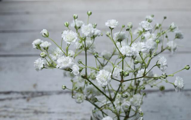 hoa bi mau trang