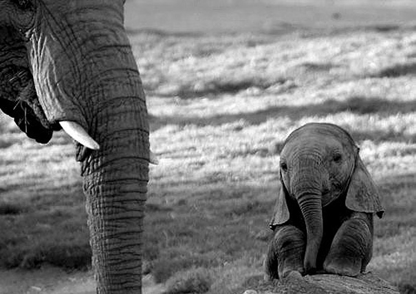 Baby Animals: Baby Elephant