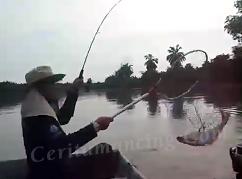 Double Strike Mancing Ikan Patin Mantap