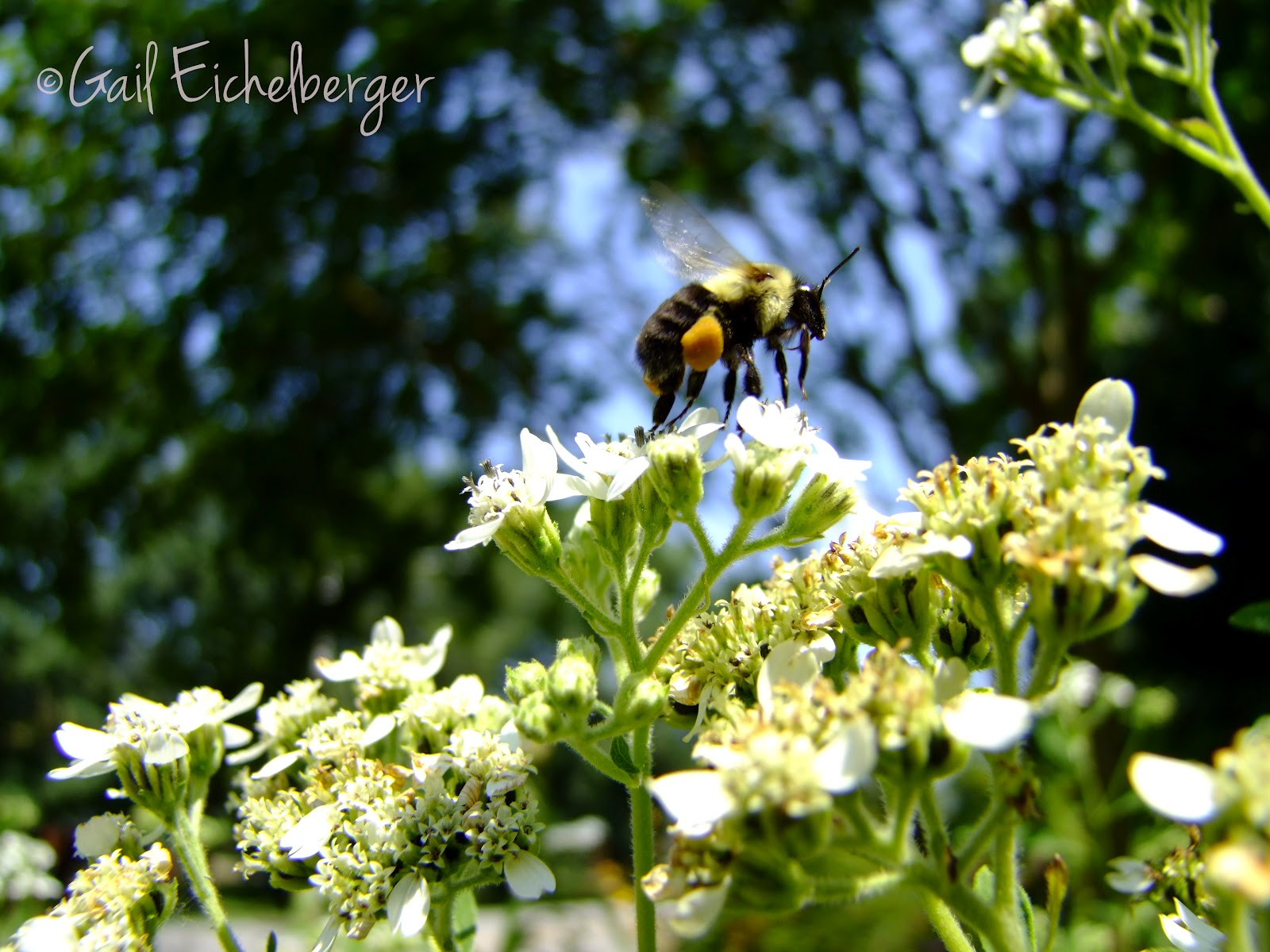 Clay and limestone bees dont care if a flower is beautiful bees dont care if a flower is beautiful izmirmasajfo Images