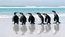 20 Day Cruise Frm Ushuaia  To Antarctica