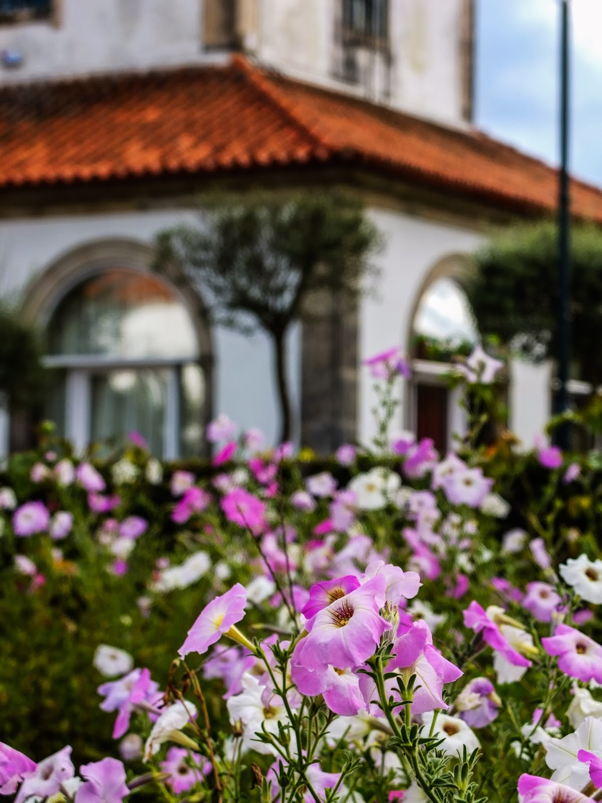 Light pink petunias at the Sanctuary of Our Lady of Sameiro in Braga, Portugal.