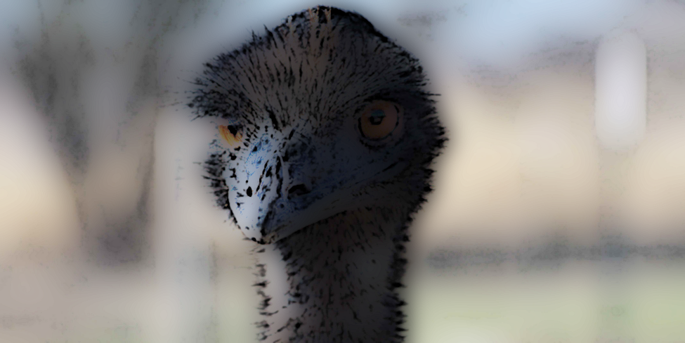 funny short story: the ostrich