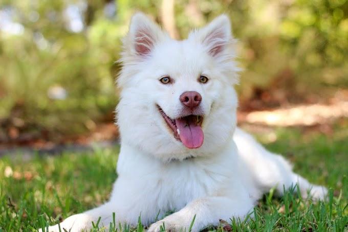 ¿Tener un perro aumenta la calidad de vida?