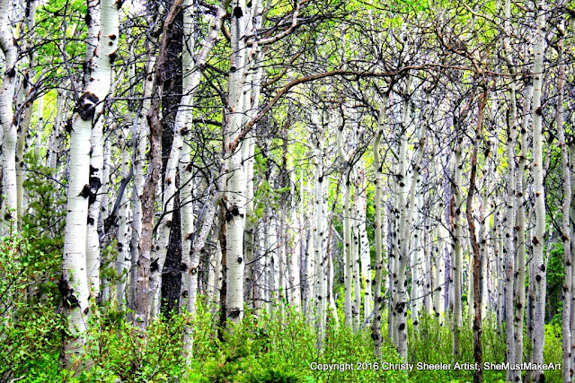 A close up of the aspen trees, their trunks all white with varied patterns of black.