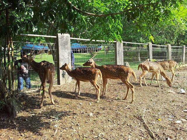 mini zoo pulau galang