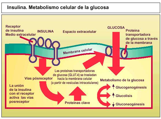 Esquema movil de insulina pdf