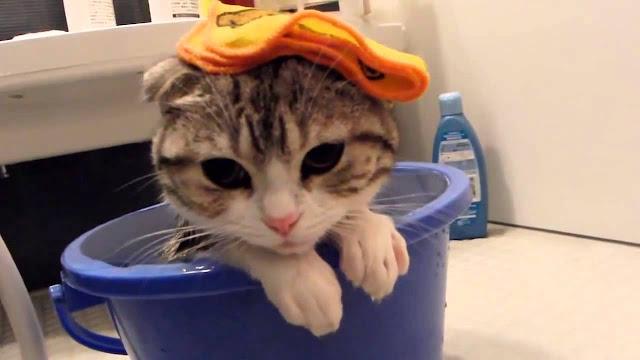Begini Cara Memandikan Kucing Kesayangan Anda