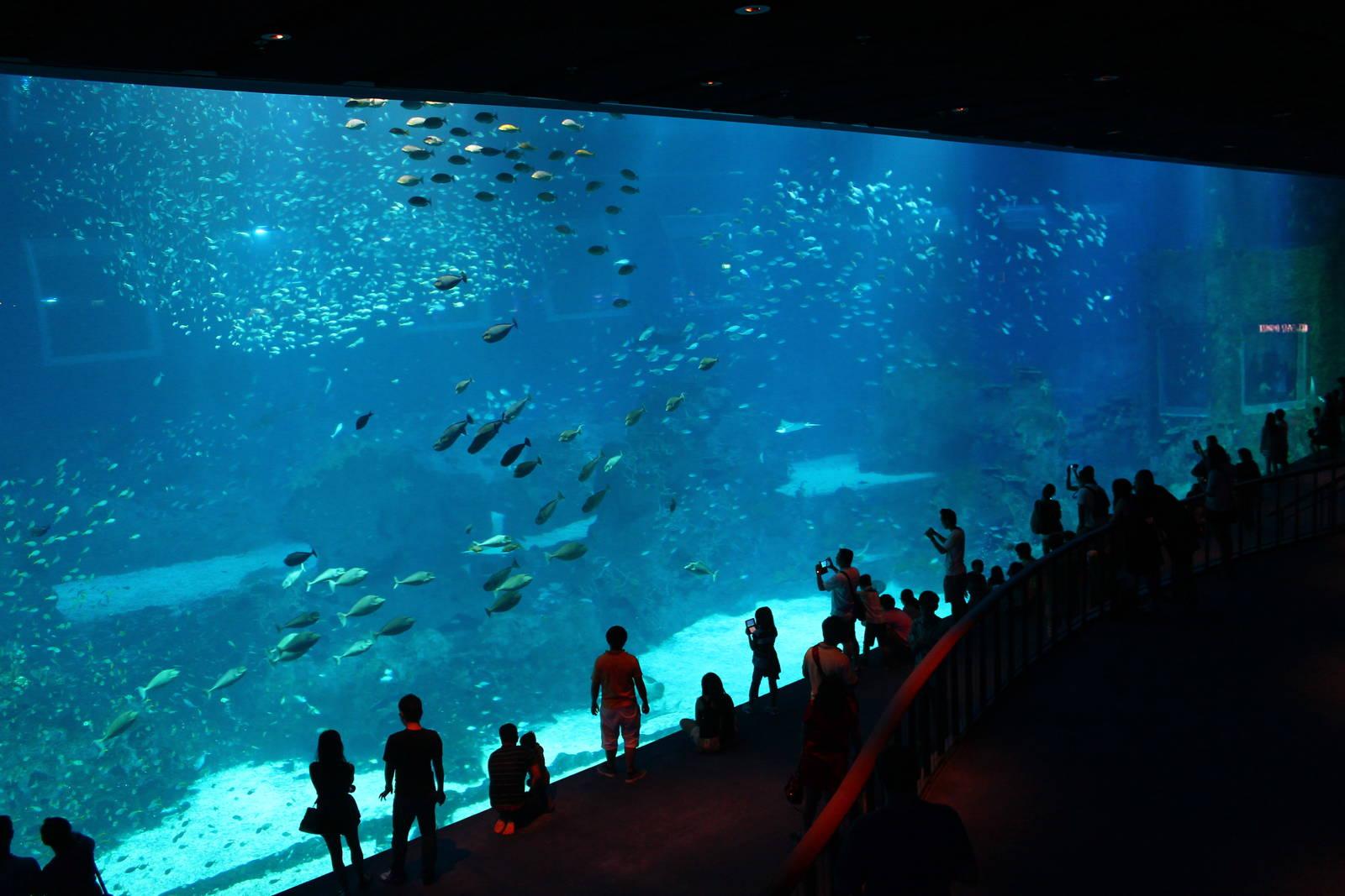 [Image: sea-aquarium.jpg]