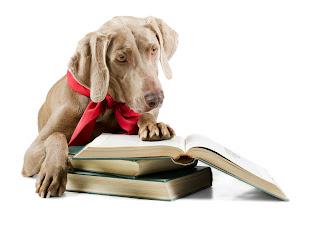 Hund mit Buch