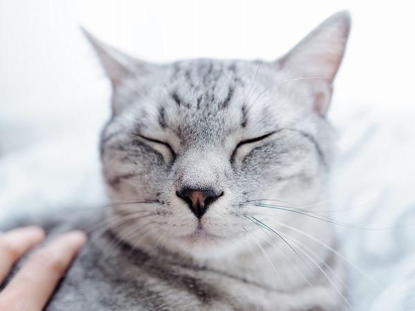 撫でられて気持ちよさそうな顔をしているサバトラ猫