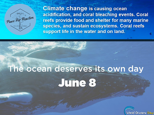 World Oceans Day June 8 pollution