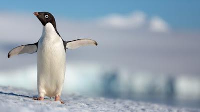Penguins 2019 Movie Image