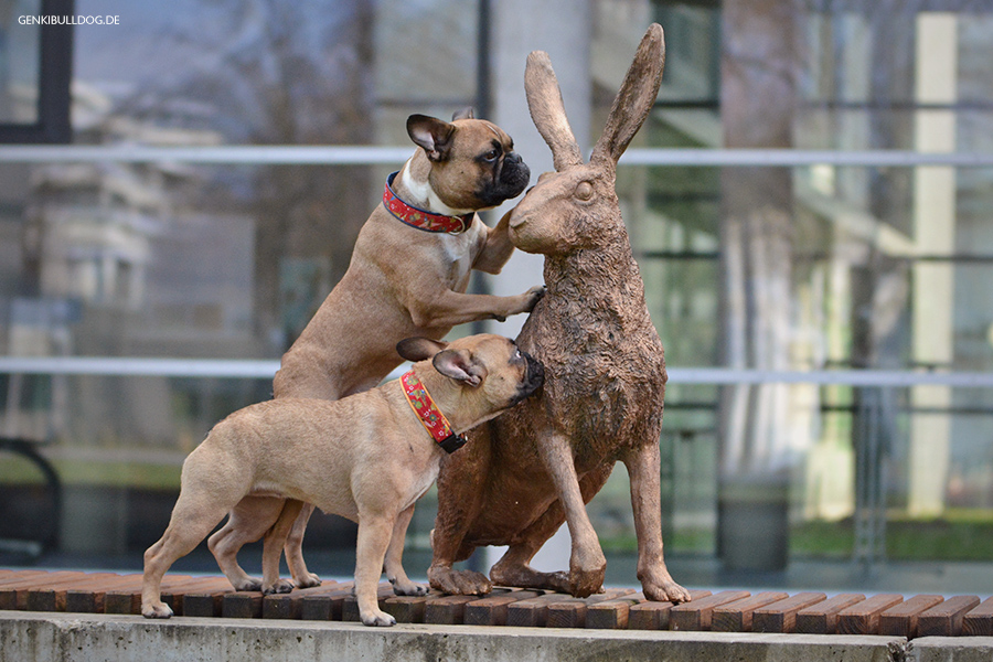 Hundeblog Monatspfoto März: Wir suchen den Osterhasen Französische Bulldogge