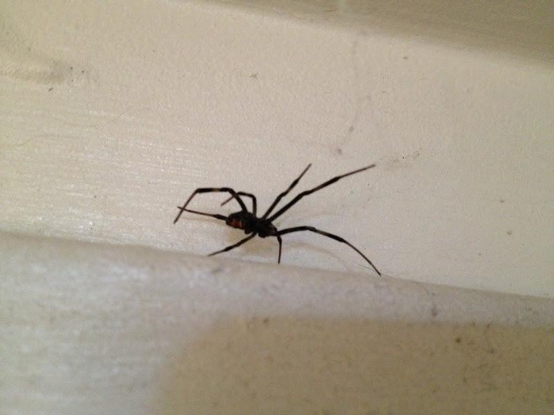 Hämähäkkilajit