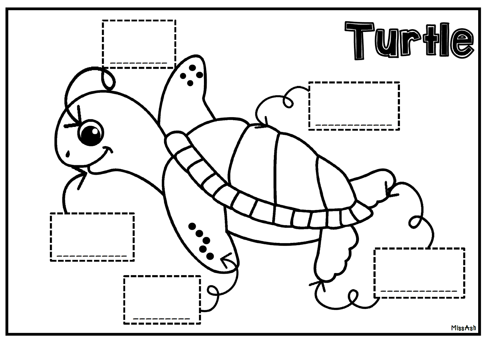 Turtle Worksheet For Kindergarten