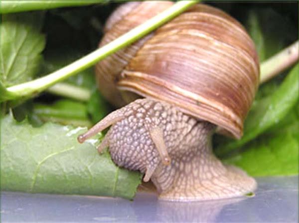 snail farming business, commercial snail farming, commercial snail farming business, snail, snail farming, snail photo, snail picture