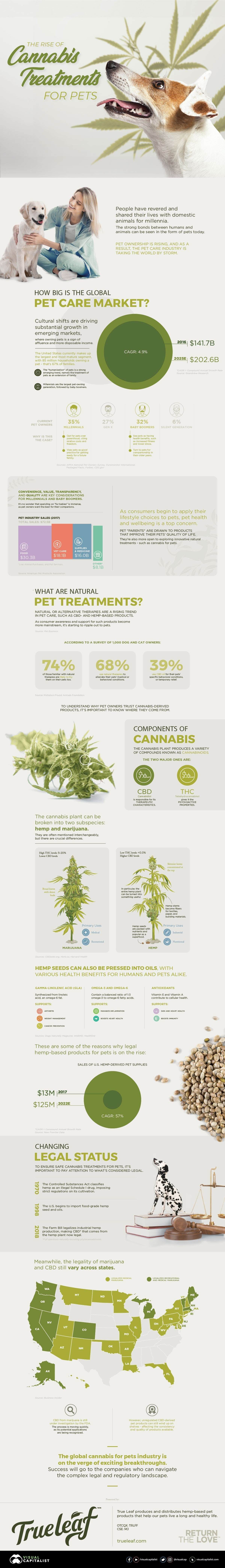The Rise of Cannabis Treatments for Pets