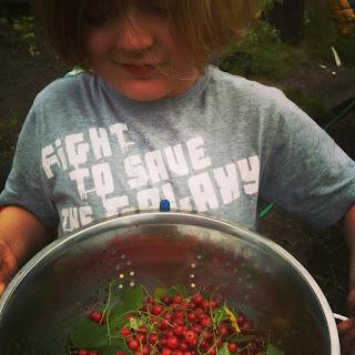 gardening, fruit harvest, life on pig row