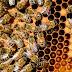 Οι μέλισσες της Παναγιας των Παρισίων έχουν σωθεί από την καταστροφή