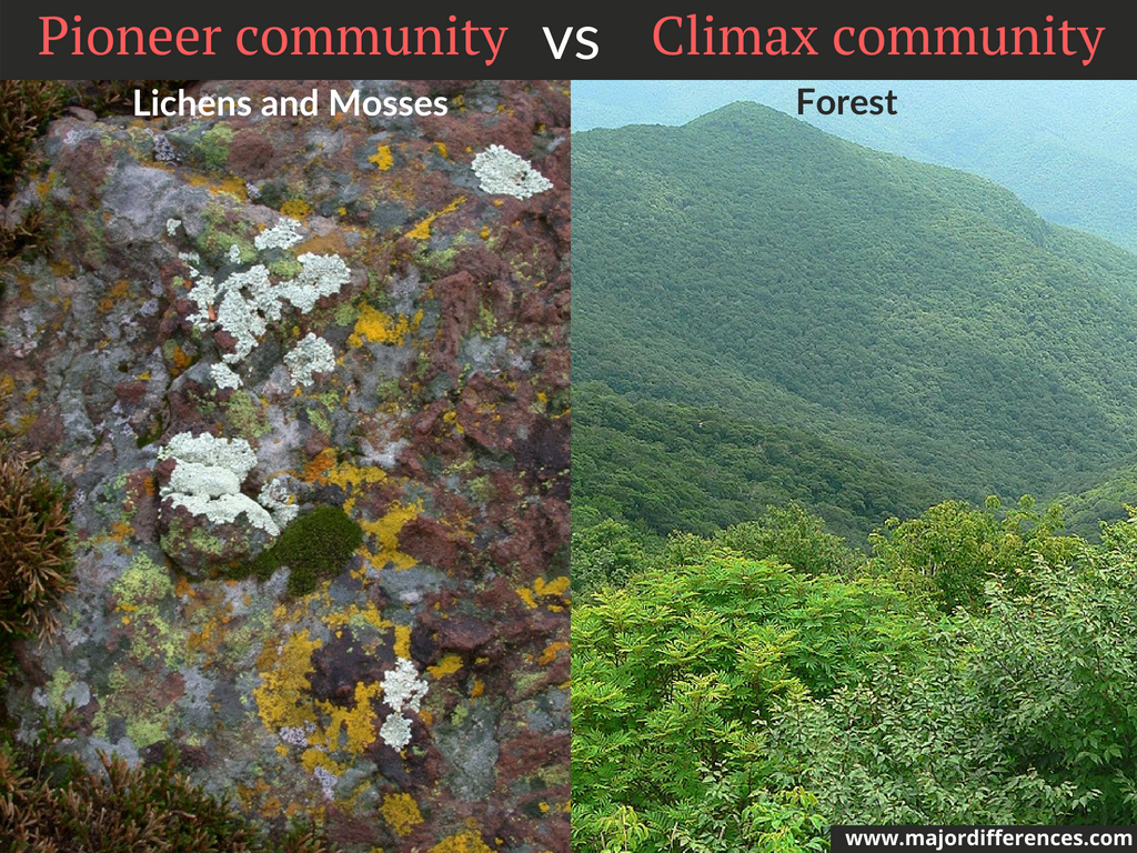 10 Differences between Pioneer Community and Climax Community