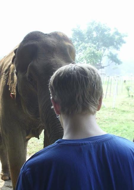 Elephant Nature Park Chaing Mai Thailand
