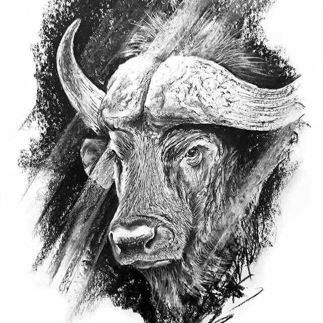 05-Water-Buffalo-Natalya-Bassani-www-designstack-co