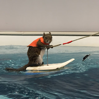 Twiggy the Waterskiing Squirrel promotes water safety in the Elite Endless Pool