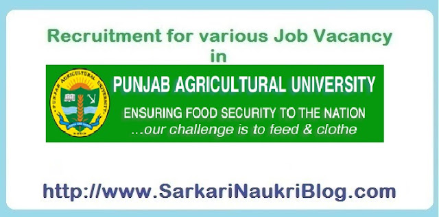 Naukri Vacancy Recruitment Punjab Agriculture University