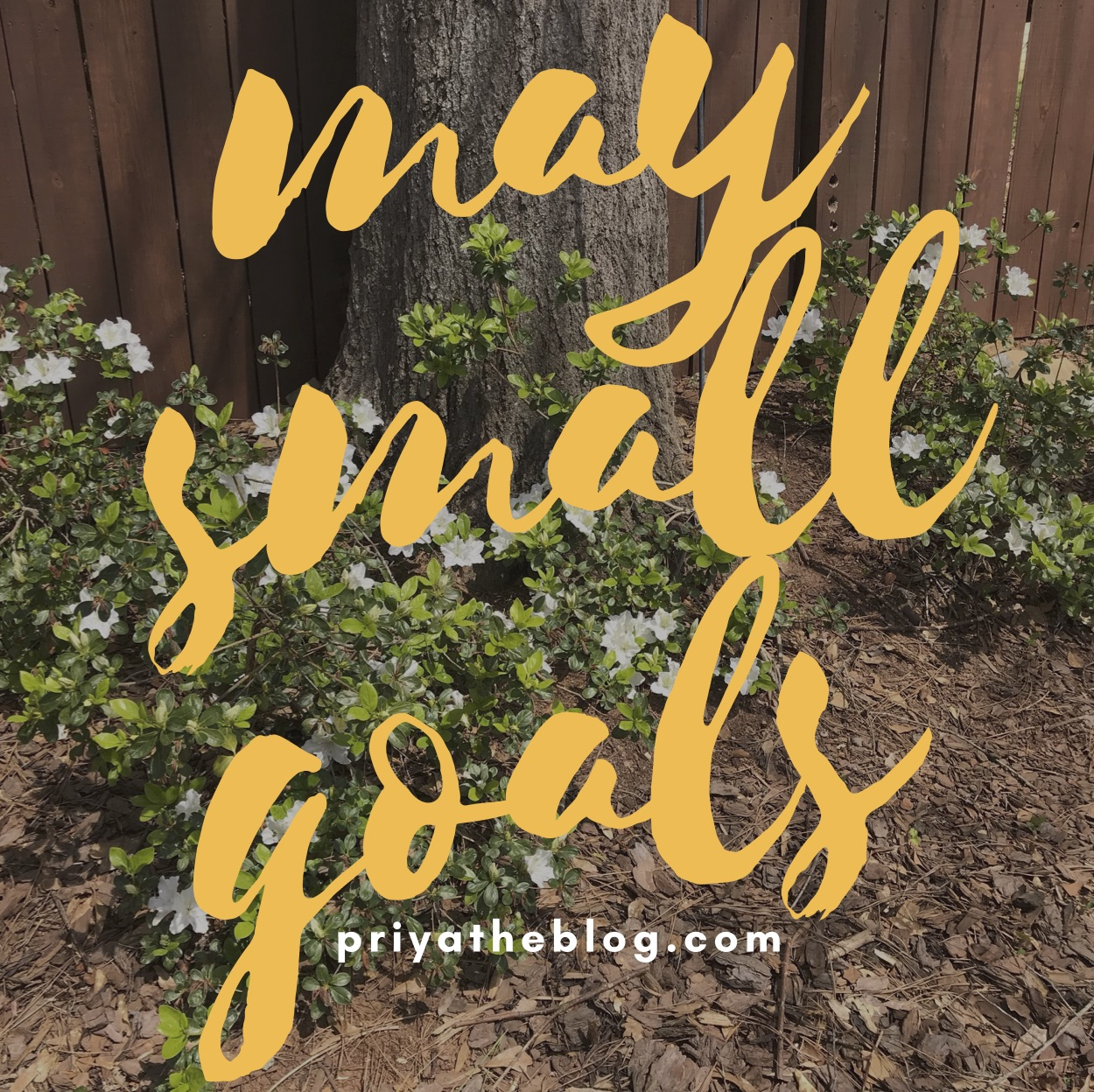 Priya the Blog, Nashville lifestyle blog, Nashville lifestyle blogger, May Small Goals