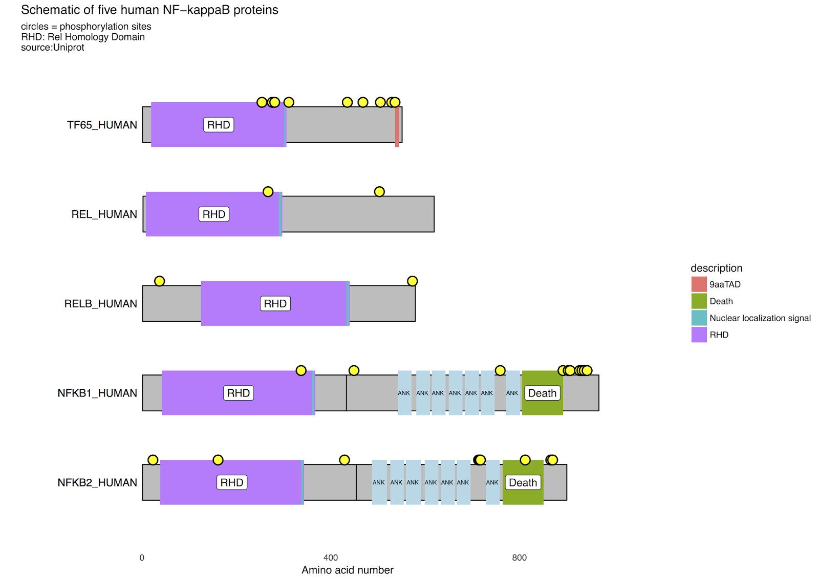 R for Biochemists: Drawing NFkappaB protein schematics with ggplot2..