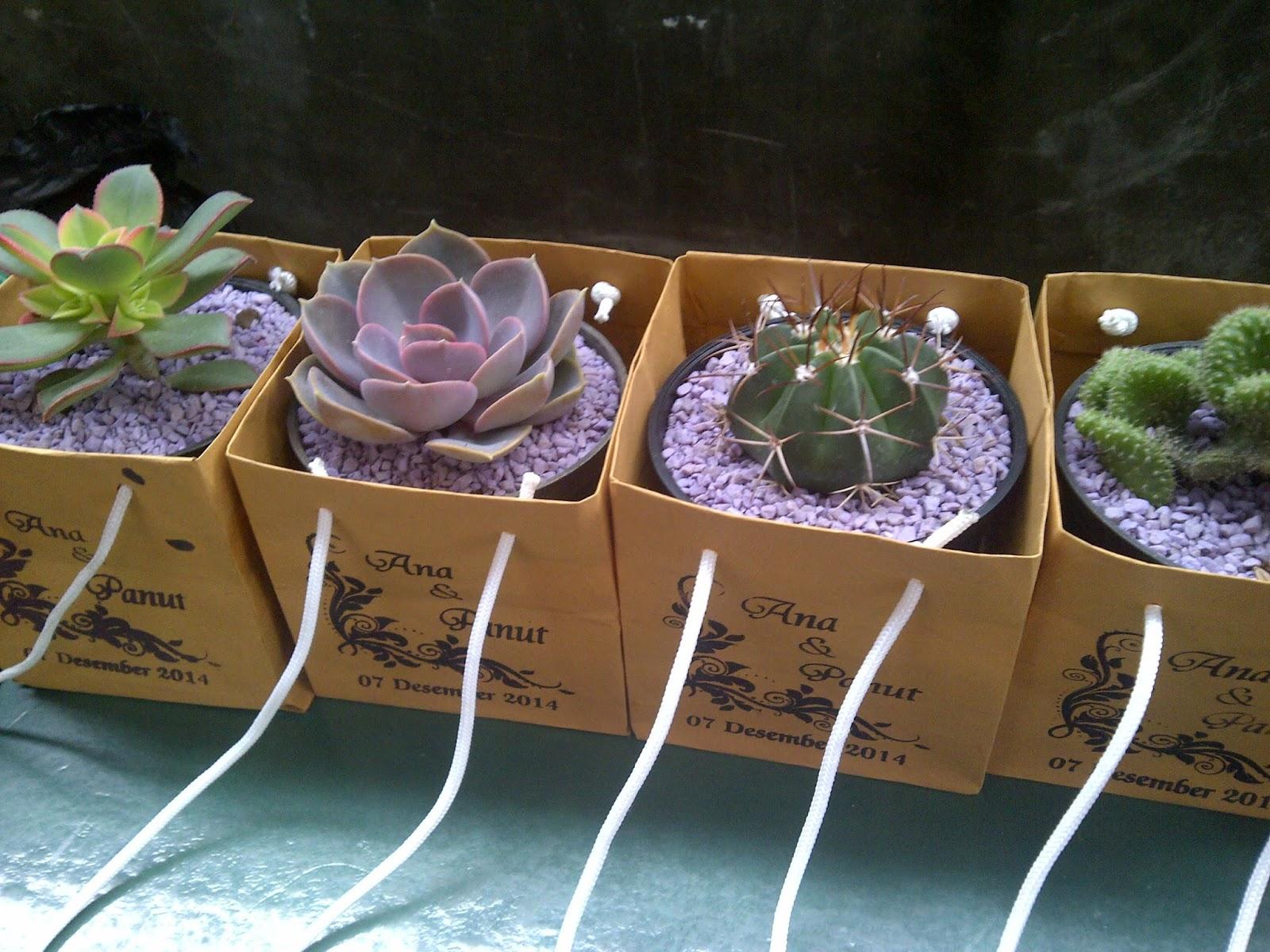 Souvenir Tanaman Kaktus Dan Sukulen Produk