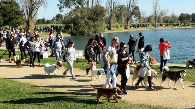 Volunteer Dog Walking Adelaide