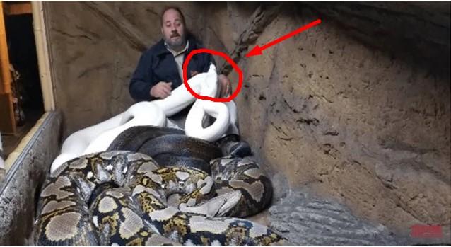Pria Ini Masuk ke Kandang Berisi Tiga Ular Berukuran Besar, yang Dilakukan Piton Putih Bikin Kapok