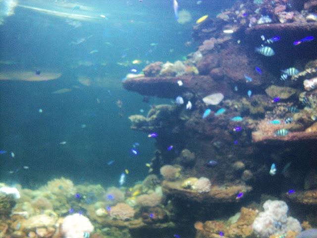 akuarium seaworld indonesia
