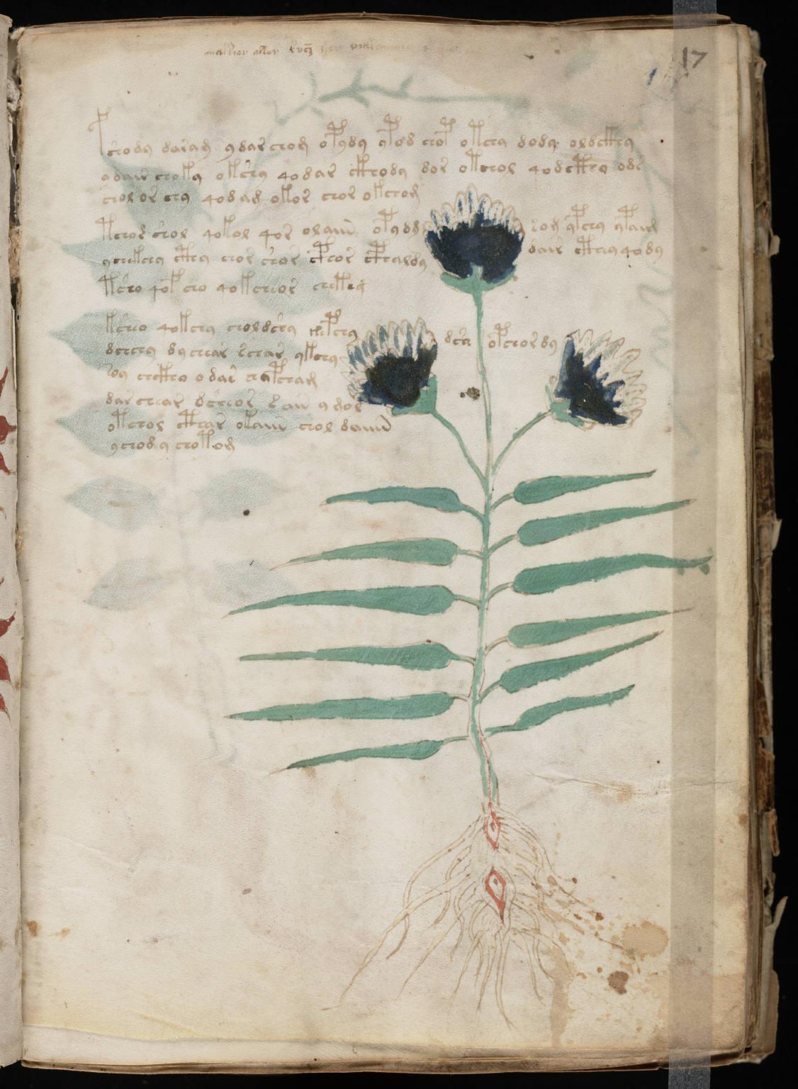 manuscrito033