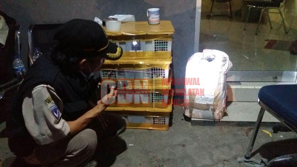 Bus Penumpang Marak Angkut Satwa Dilindungi, BKP Gencar ...