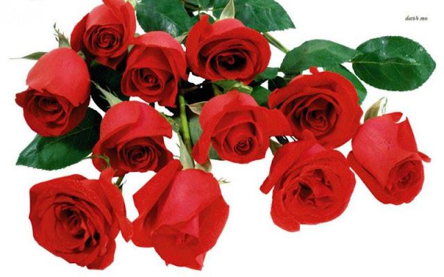 hoa đẹp nhất thế giới 8