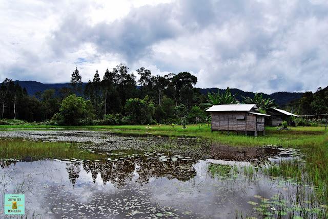 Pa Lungan (Kelabit Highlands), Bario (Malasia)