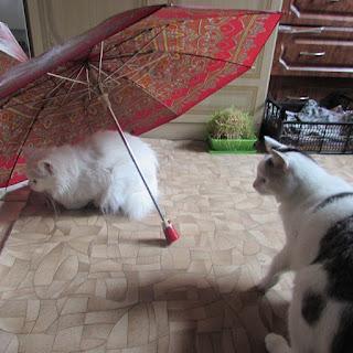 А где мой зонтик