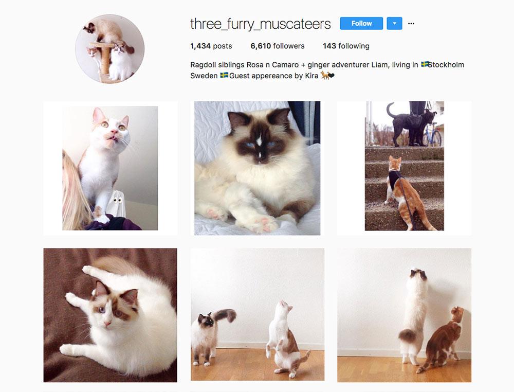 Instagram Three Furry Muscateers