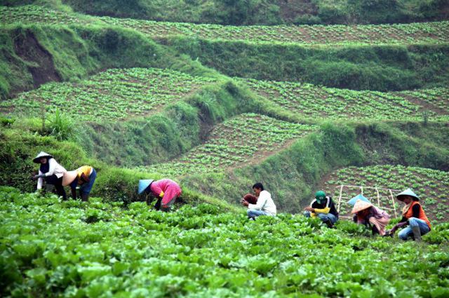Potensi Agribisnis Indonesia