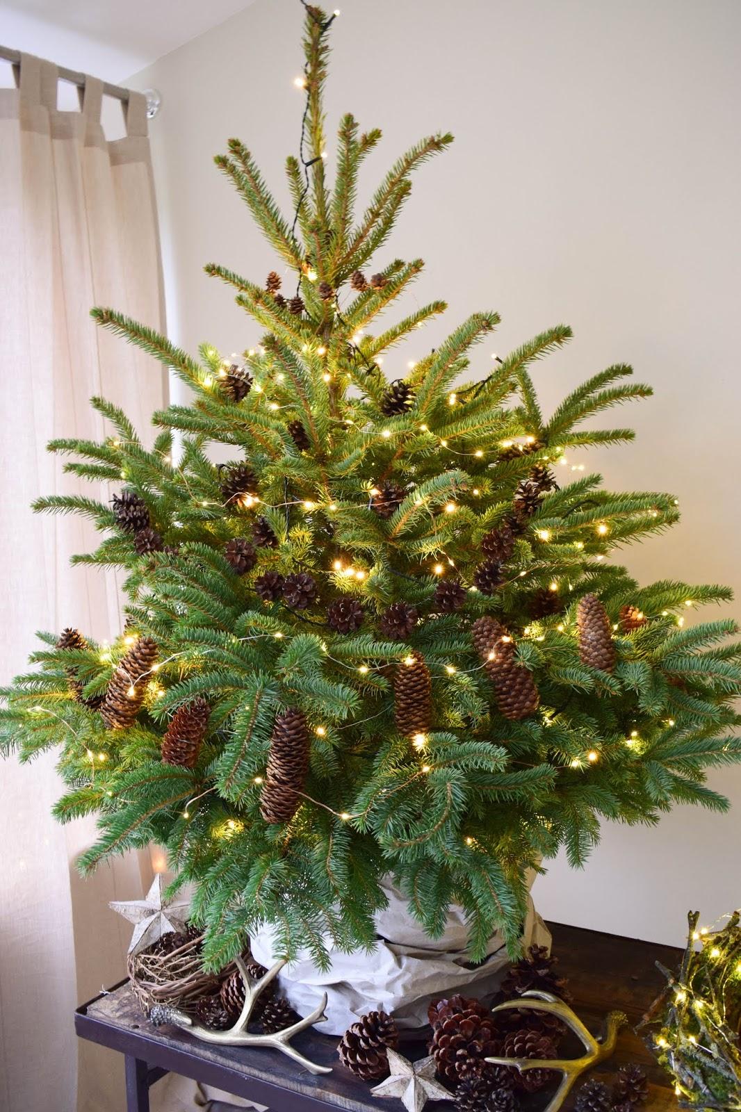Weihnachtsbaum Natürlich.Natürliche Deko Für Den Weihnachtsbaum Weihnachtsbaumschmuck