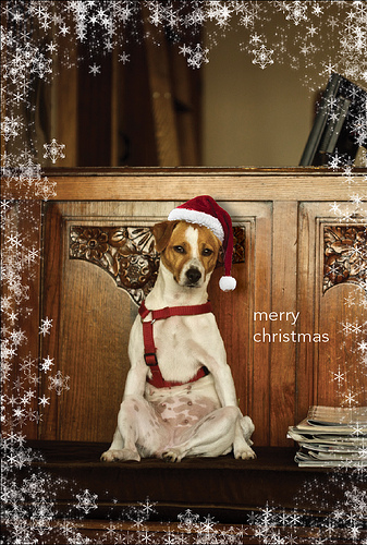 Funny Frog Wallpaper Quotes And Pictures Funny Image Collection Funny Christmas Dog Photos And