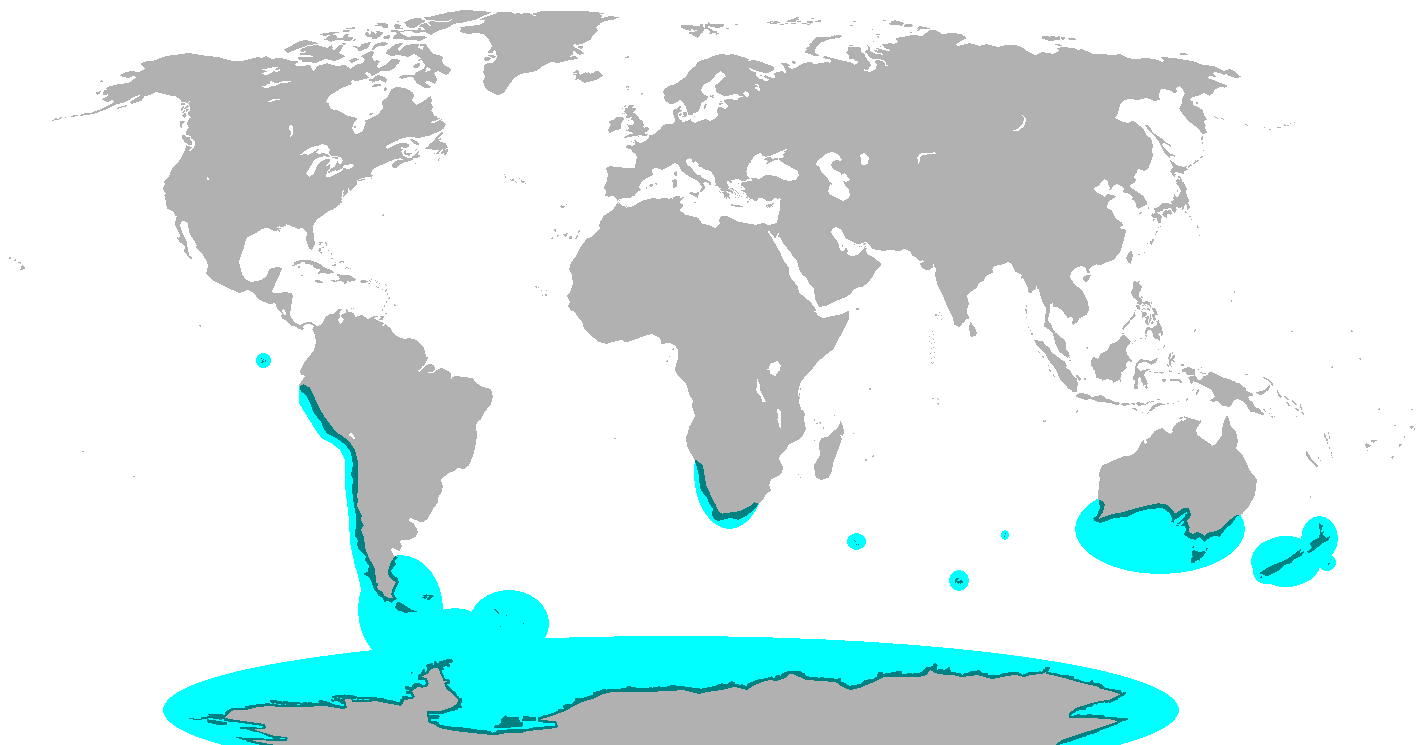 The range of the penguin